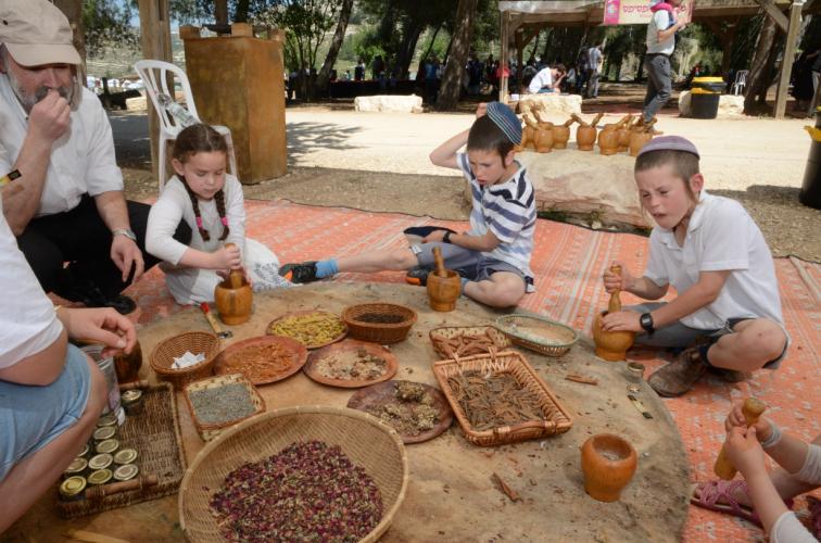 תל שילה - שילה הקדומה