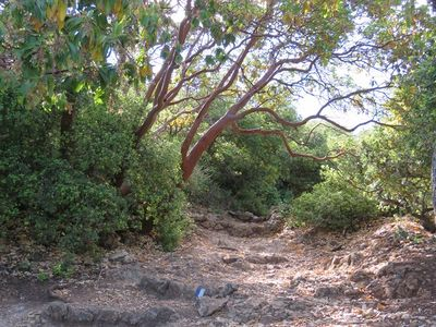 Mountain trail1.jpg