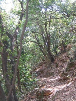 Yagur nesher trail.jpg