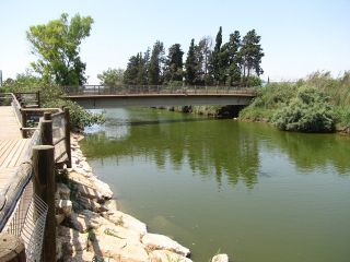 Turtles bridge1.jpg